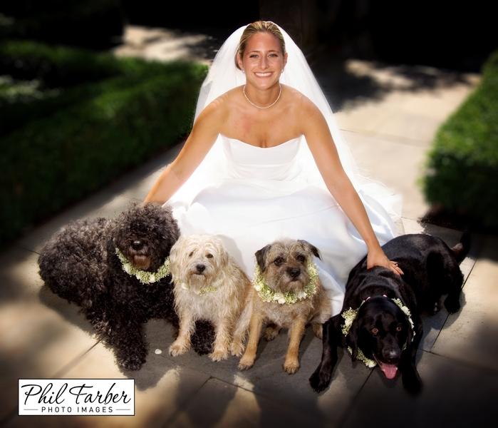 dog flower collars